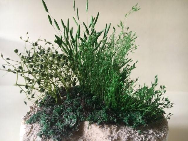 La vegetazione nel presepio: immagine ravvicinata