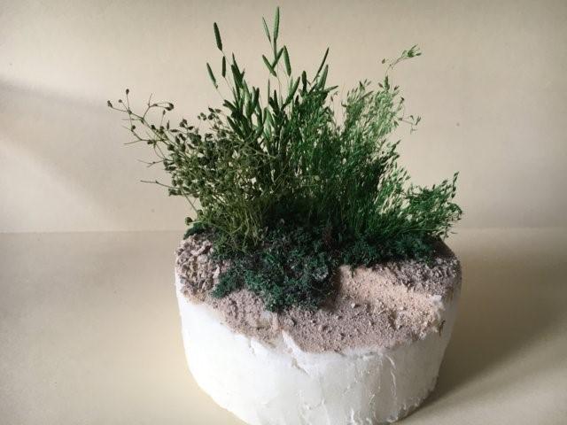 La vegetazione nel presepio: la composizione
