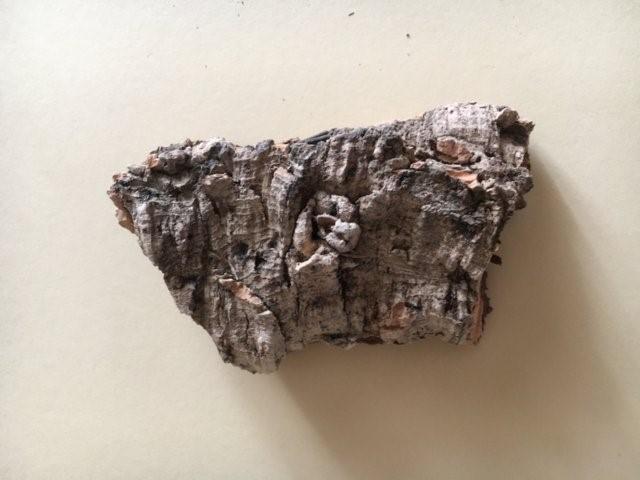 La vegetazione nel presepio: base in corteccia di sughero