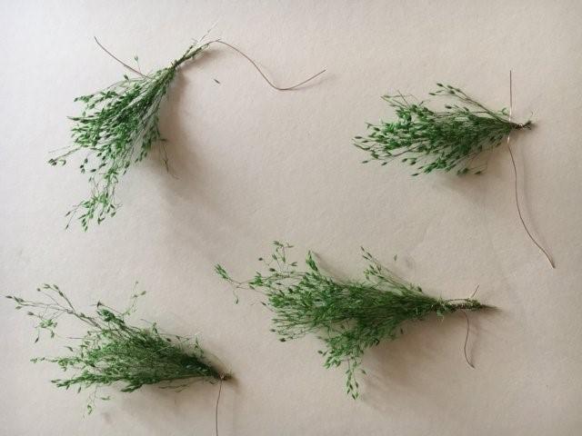 La vegetazione nel presepio: i ciuffi di vegetazione