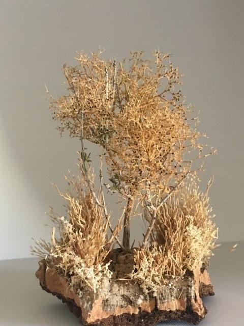 vegetazione per presepio (composizione 2)